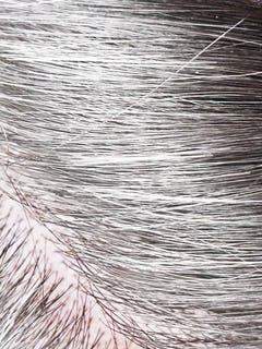 All Gray Hair